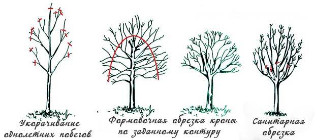 обрезка-деревьев.jpg